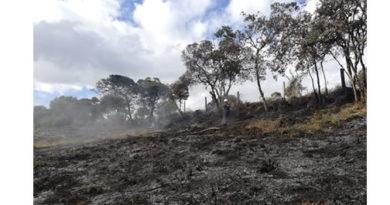 Incendios forestales han afectado 178 hectáreas en el Territorio CAR